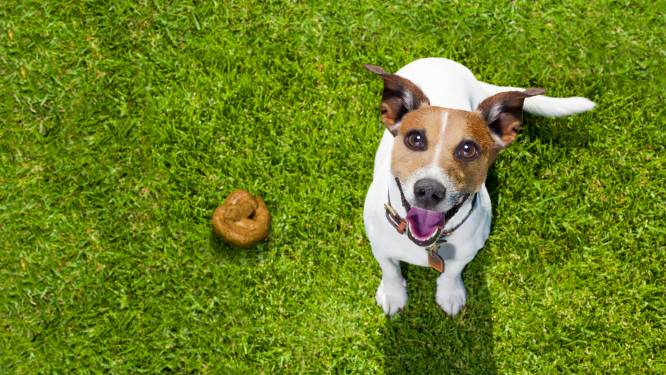 Nauwelijks boetes meer voor hondenpoep, maar in grote steden zijn handhavers nog wel streng