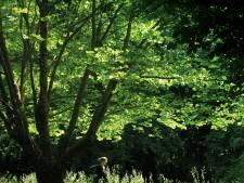 Rennen met kleine voetafdruk in 'slaafvrije' hardloopkleren uit Zeeland