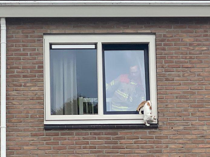 Een brandweerman is binnen en kan de kat aan de Vijverweg in Ermelo bijna bevrijden.
