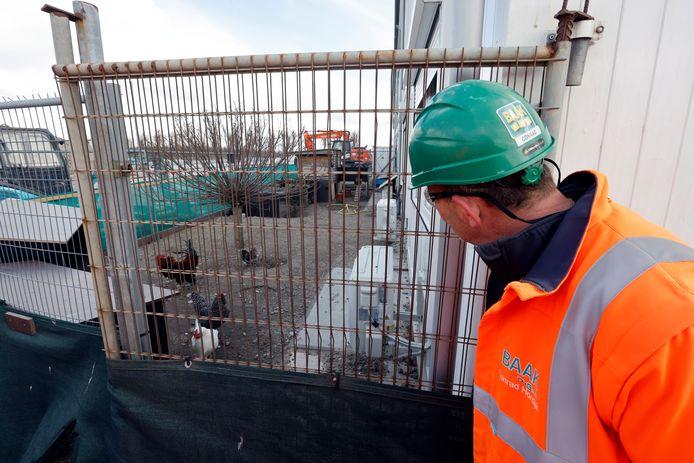 Conrad Hordijk neemt een kijkje bij de kippenren achter de bouwkeet.