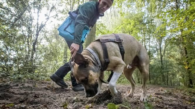 Martijn vindt honderden kostbare truffels met zijn zelfgetrainde speurhond: 'Dexter jokt niet'