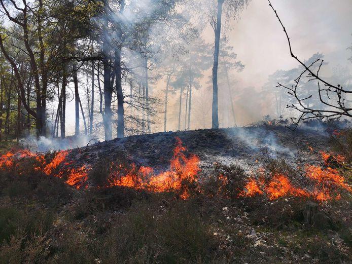 In augustus 2019 brandde een stukje Soesterduinen af.