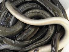 Utrechter (60) steelt 24 pakketten paling uit de Boni en beweert dat hij ze langs het kanaal vond