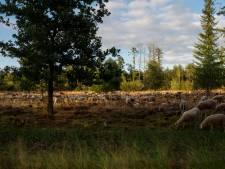 Teleurstelling bij windpark De Pals: 'Milieuclubs zitten halen klimaatdoelstellingen zelf in de weg'