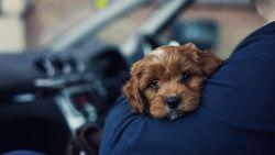 Waarom sommige mensen meer van honden dan van mensen houden