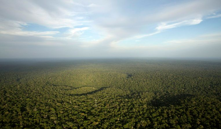 Een deel van het Amazonewoud in Brazilië. Beeld REUTERS