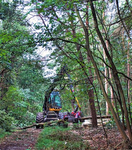 Bomen vallen als lucifers bij onderhoud Boswachterij Dorst