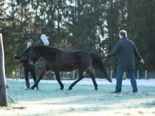 Filmopnames bij paardenhouder in Putten: 'Paarden worden ongelukkig in een stal'