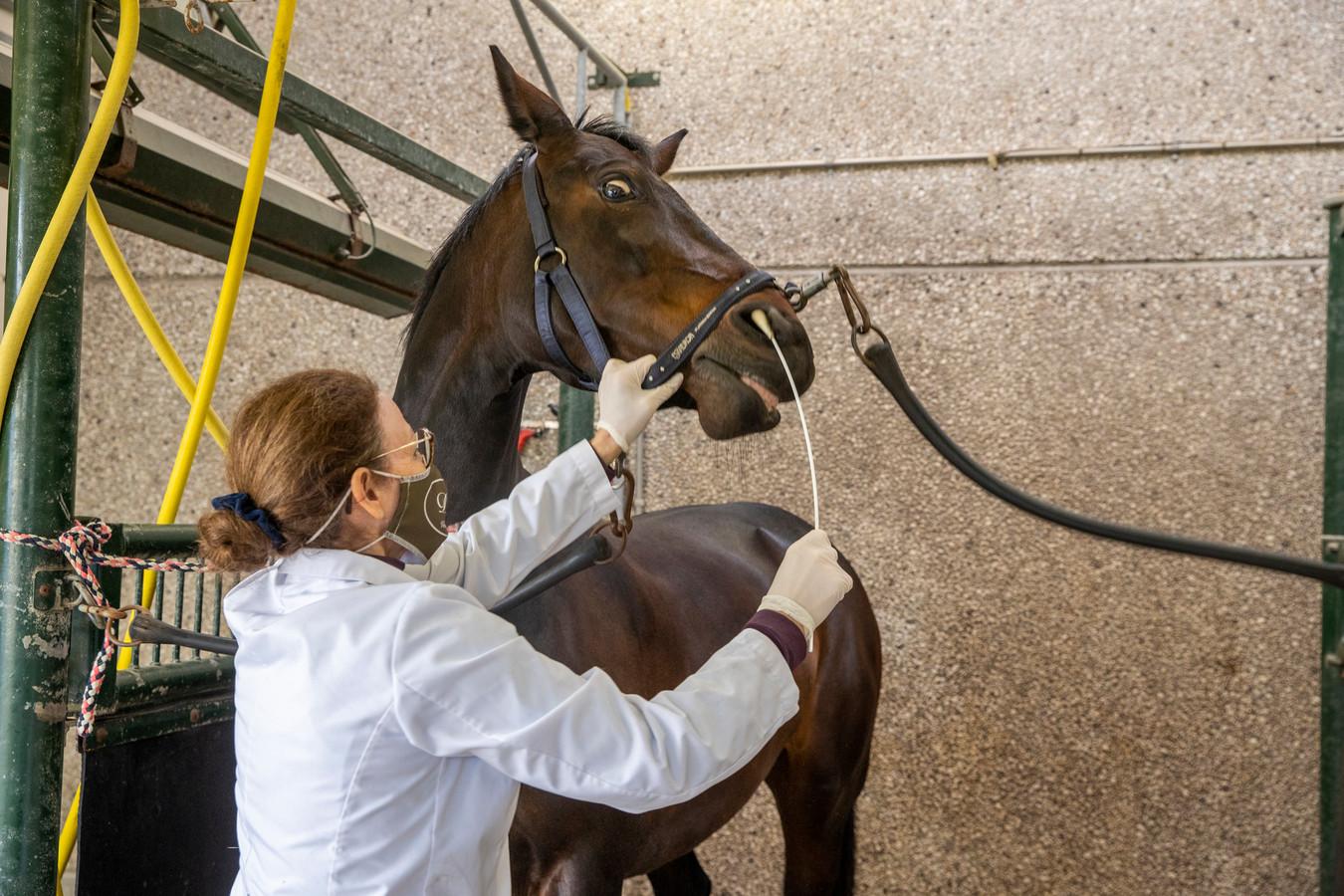 Paarden worden getest op het virus.