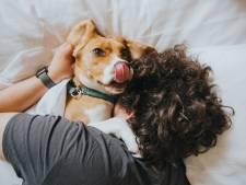 Vous aimez les chiens? C'est probablement dans vos gènes