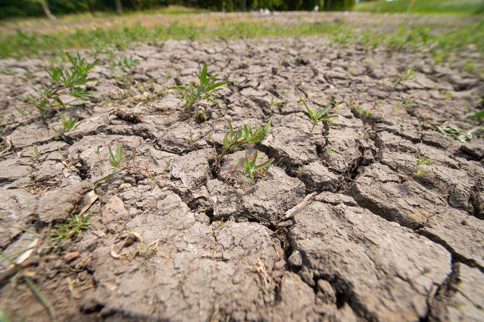 De ernstige droogt in de periode van 15 maart tot 15 september wordt als ramp erkend.