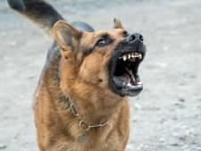 Woekerprijzen, absurde kruisingen en bijtincidenten: hoe corona ons met een hondenprobleem opzadelt