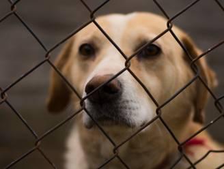 GAIA wil dat dierproeven op gezonde honden en katten verboden worden