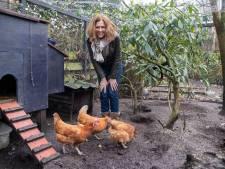 Sarisca geeft afgedankte legkippen een 'kipwaardig' leven: ''s ochtends zitten ze echt op me te wachten'