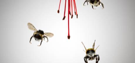 Gratis groen moet bijenpopulatie verdubbelen