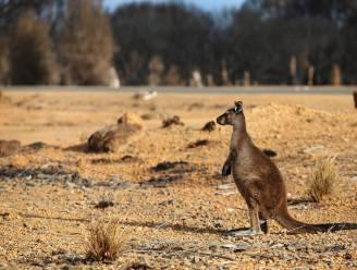 """Bijna drie miljard dieren getroffen door bosbranden in Australië: """"Een van de ergste natuurrampen in moderne geschiedenis"""""""