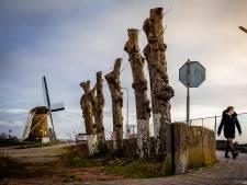 Bomen die beschermd zijn en toch worden gekapt in de Hoeksche Waard? 'Dat moet niet meer kunnen!'
