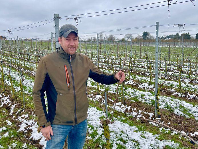 Bij Gerry staan sommige wijnranken al in bloei, hij hoopt het beste maar maakt zich voorlopig niet al te veel zorgen.