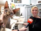 In dit 'all inclusive hotel' worden katten vertroeteld als hun baasje op vakantie is