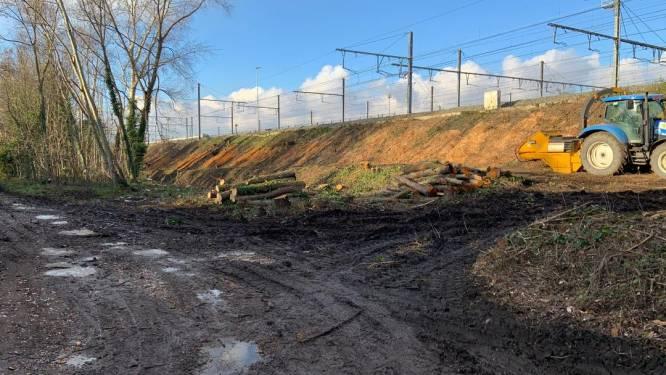 """Infrabel ging wel degelijk in de fout bij kaalkap in Sint-Denijs-Westrem: """"Op verouderd plan stond natuurgebied niet ingekleurd"""""""