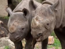 Vrienden van Blijdorp gaan duizenden euro's inzamelen: 'Bouwen in dierentuin moet doorgaan'