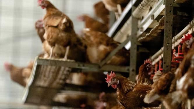 België is officieel opnieuw vogelgriepvrij