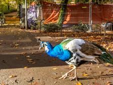 Vogeleiland in Deventer straks trots als een pauw