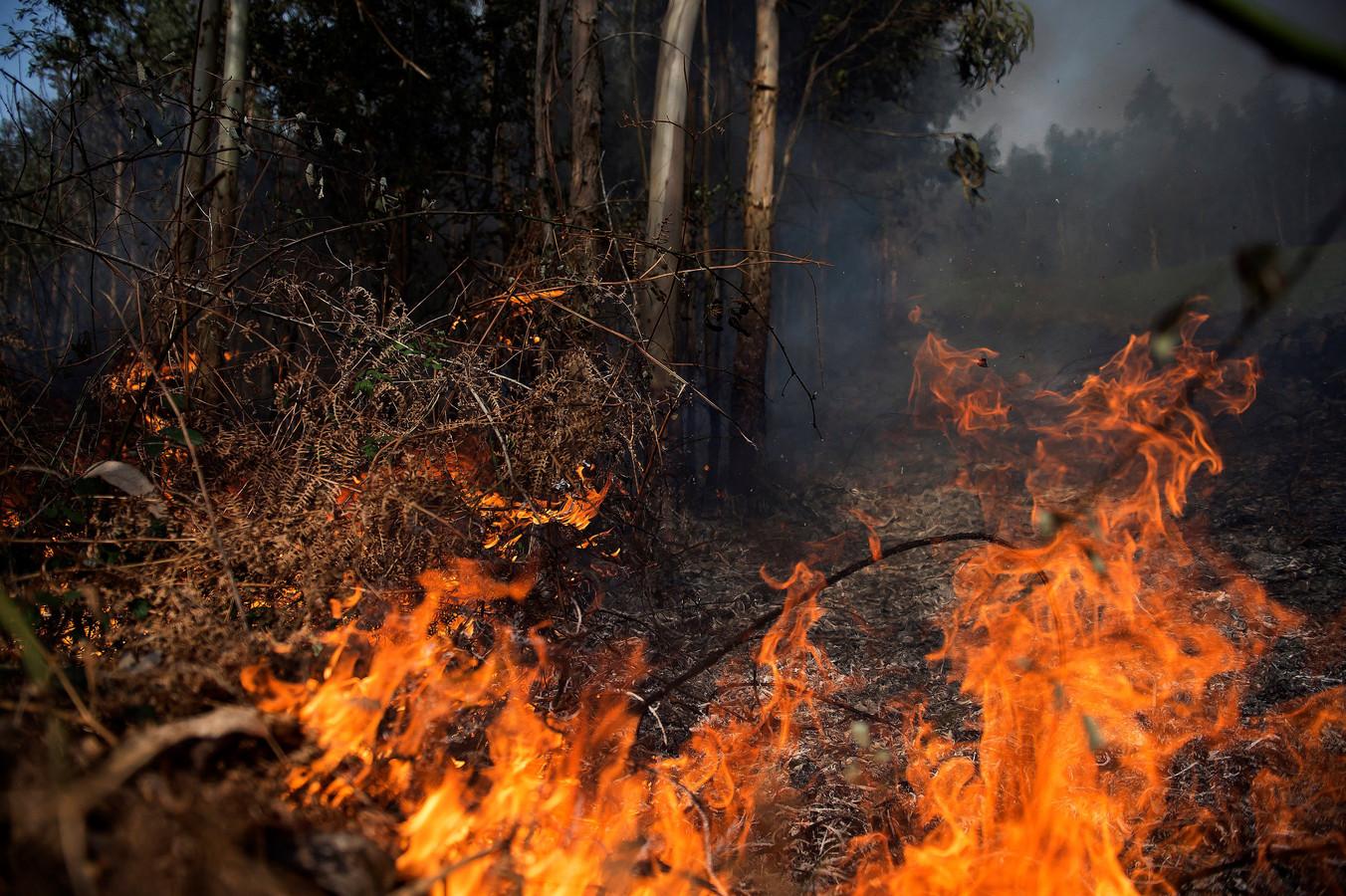 De verwoestende brand in Cantabrië.
