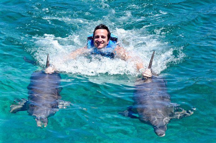 Zwemmen met dolfijnen verstoort hun natuurlijke groepsgedrag.
