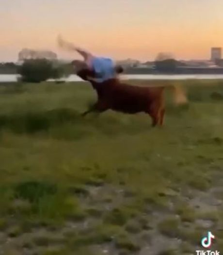 Woede om weghalen runderen nadat vrouw op hoorns wordt genomen: 'De omgekeerde wereld, waarom moeten dieren de dupe worden?'