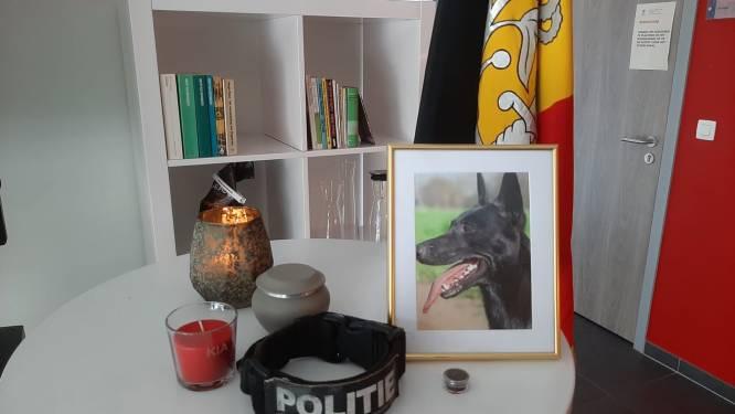 """Politiehond Kia """"zo goed als zeker overleden door vergiftiging"""""""