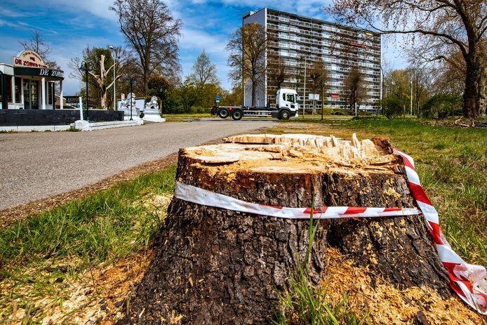 Er is onvrede over de kap van een kastanje bij restaurant De Zomertuin, aan de Zwolseweg. Volgens de Deventer Bomenstichting is de boom te vroeg gekapt: de boom is geveld in de bezwaarperiode