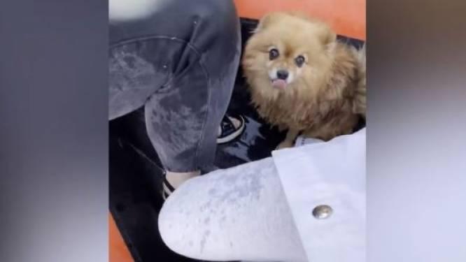 Hondje wil in het water springen, maar wordt op het nippertje gered