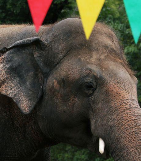 L'éléphant maltraité au Pakistan va être transféré en avion au Cambodge grâce à la chanteuse Cher