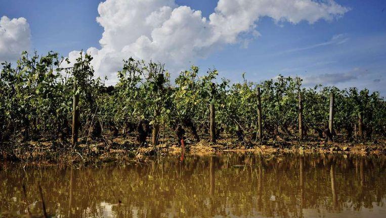 Wijnvelden in de Bourgogne. Beeld AFP