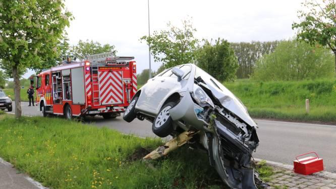Bestuurster rijdt frontaal tegen boom: stam breekt in twee door klap
