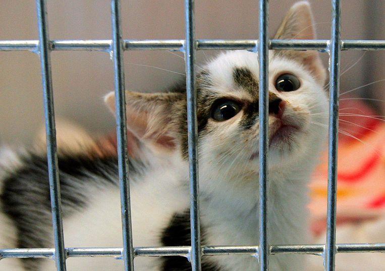 Tijdens de intelligente lockdown steeg de vraag naar kittens enorm.  Beeld ANP