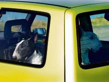 Politie Dronten redt twee honden uit hete auto