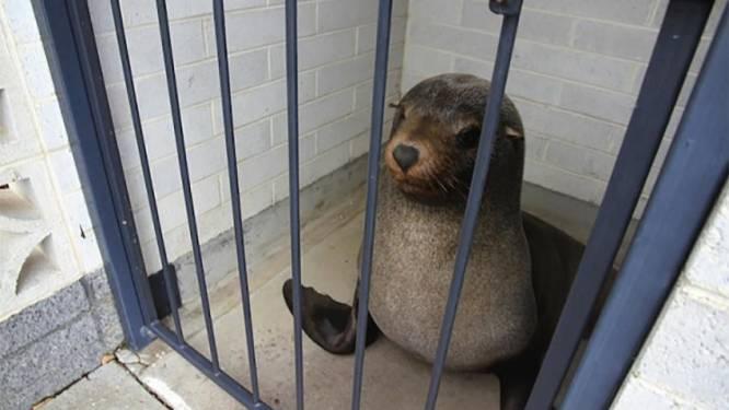 Vrouw treft slapende zeeleeuw aan op toilet
