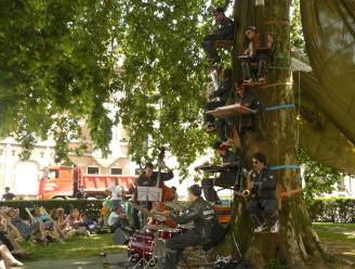 Is er in Gent nog plaats voor eeuwenoude bomen? Milieuorganisatie doet opmerkelijke oproep