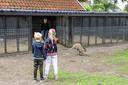 Hups, daar gaat ze: Wallaby Trudi. Door de familie Pauwels gedoneerd aan het hertenkamp aan de Vinkenstraat in Borne. Een wens van de onlangs overleden Rudi Pauwels.