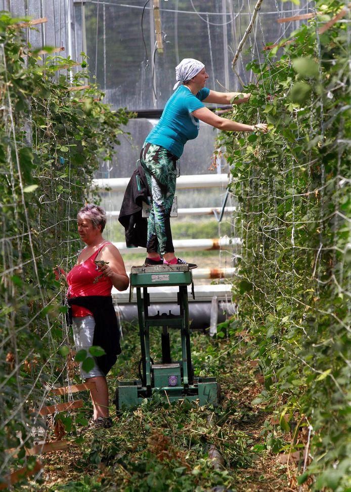 Huisvesting van arbeidsmigranten staat op de agenda van Meierijstad.