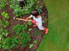 Des conseils pour gagner la bataille contre les mauvaises herbes