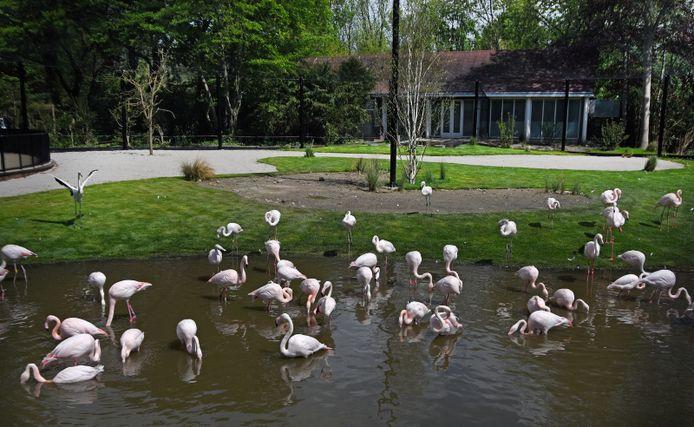 Flamingo's in hun nieuwe verblijf in Diergaarde Blijdorp