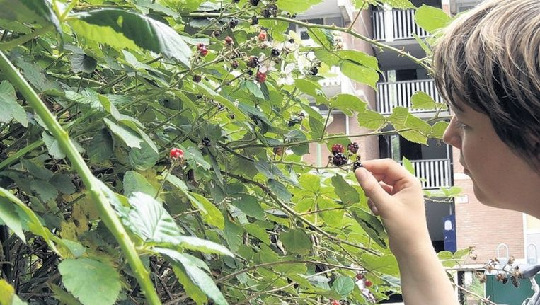 Planten En Bomen : De stad staat vol met eetbare planten en bomen trouw