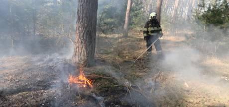 Brand in bosgebied bij Het Zand in Alphen