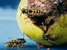 Last van wespen? Maak een fruittafeltje voor ze