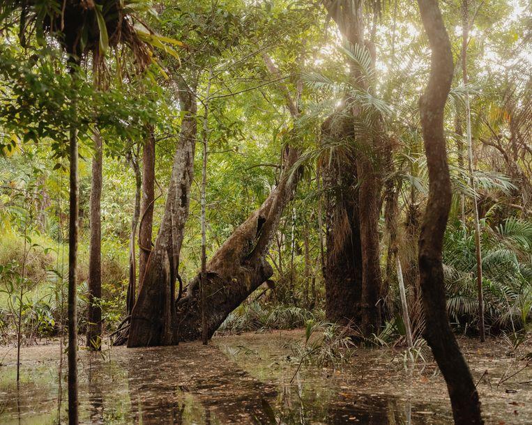 Floresta Encantada, Lago Verde in het natte seizoen. Beeld Luisa Dorr