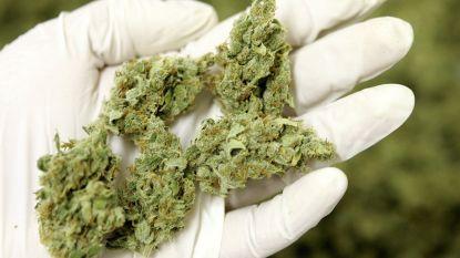 1.000 planten en 13 kilo cannabis aangetroffen in Antwerpen, 3 Nederlanders opgepakt