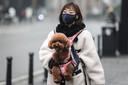 In Wuhan zitten naar schatting zo'n 50.000 huisdieren moederziel alleen thuis, zonder eten of drinken.